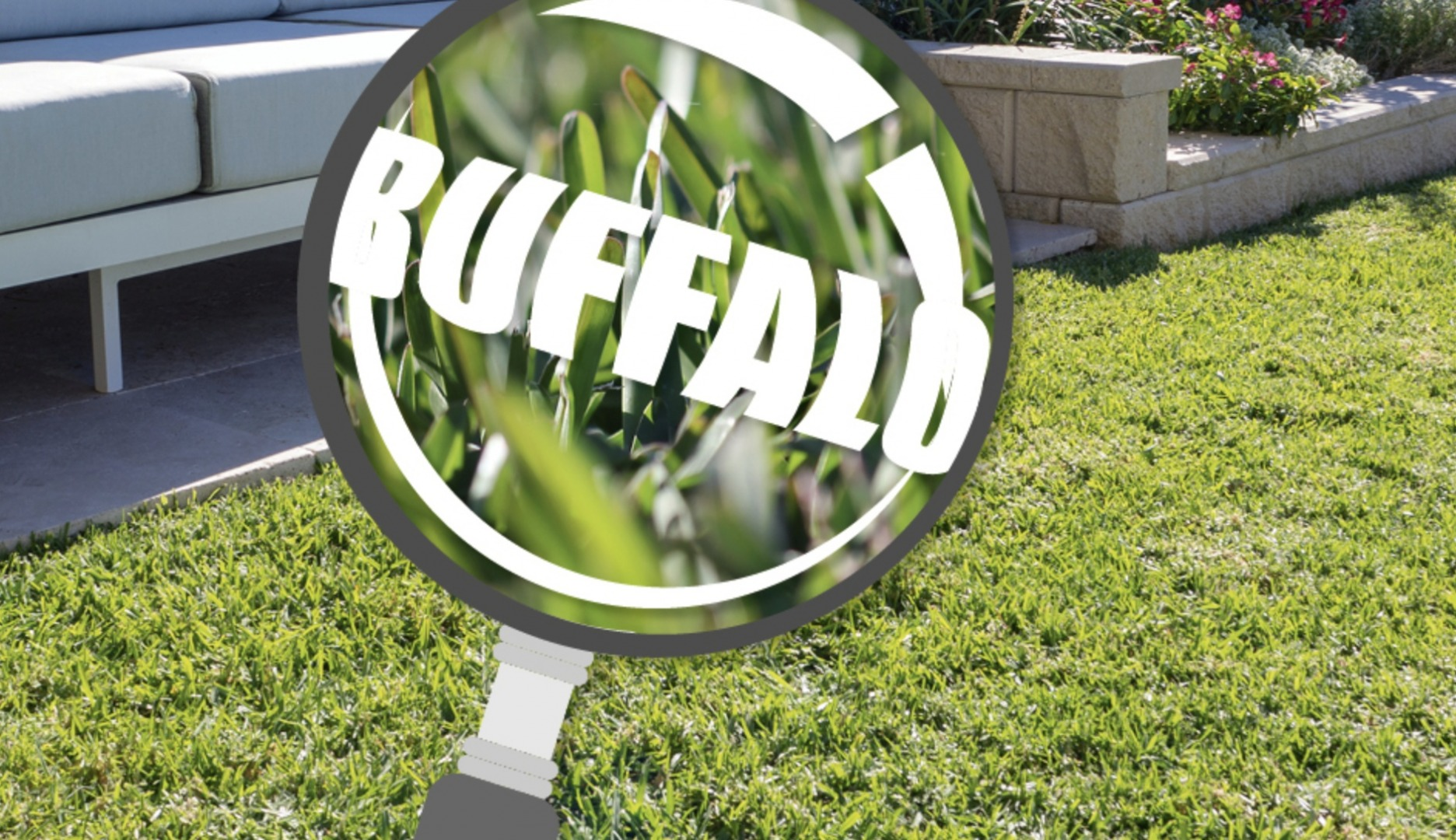 Buffalo Grass in Focus