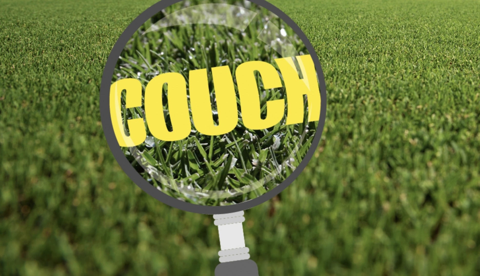 Couch Grass in Focus
